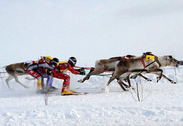 Deer Racing (13 pics)