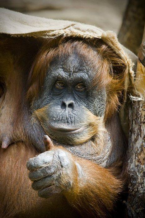 Amazing Animal Pictures (36 pics)