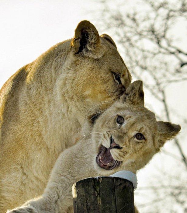 Amazing Animal Photos (103 pics)