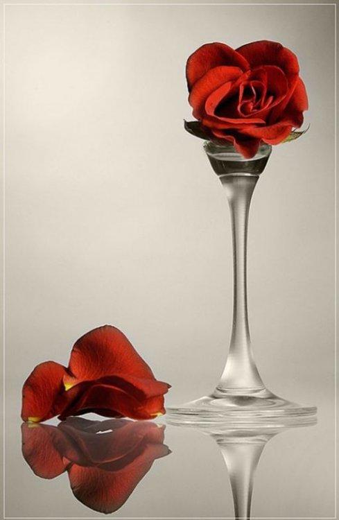 Wine Glasses (20 pics)