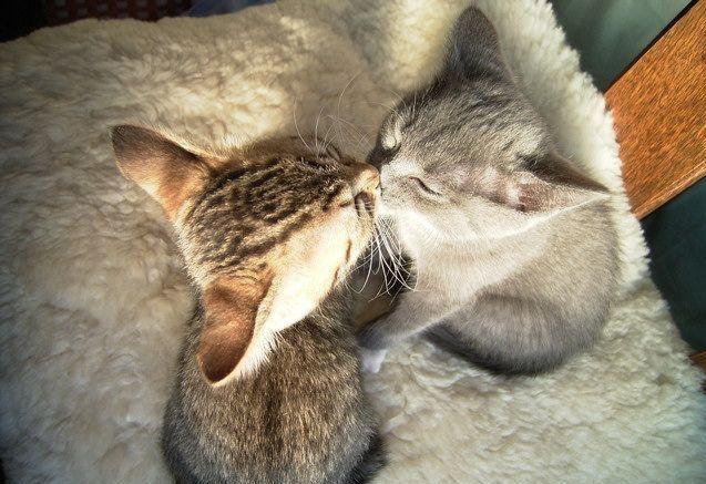 Cat Photos (25 pics)