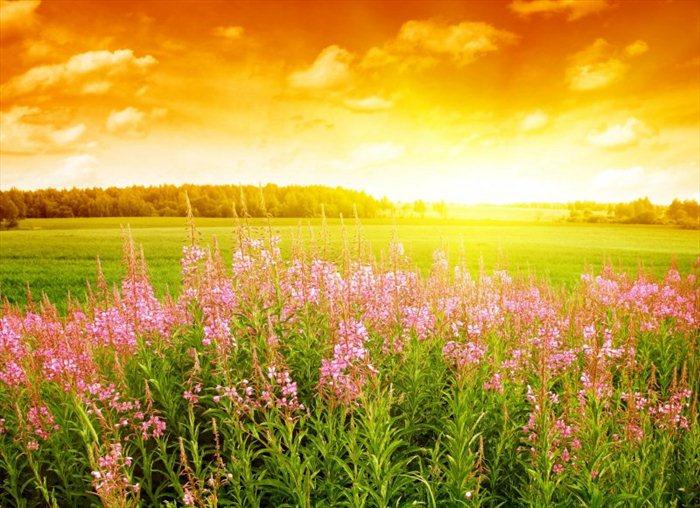 Beautiful Nature (31 pics)
