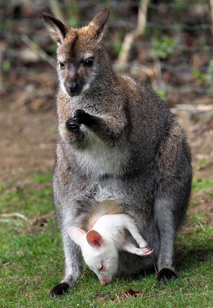 Animals with Babies (25 pics)