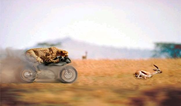 Hilarious Photoshopped Animals (30 pics)