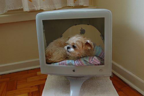 Pets in Monitors (9 pics)