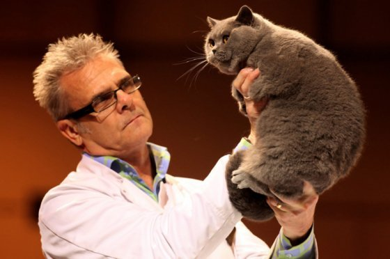 Cat Show in Britain (20 pics)
