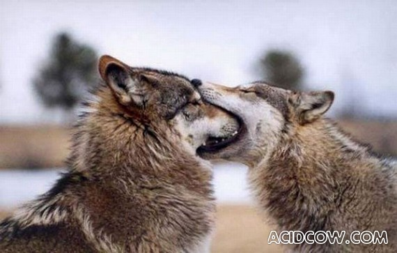 Animals in Love! (73 pics)