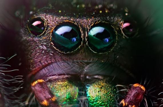 Big eyes animals (51 pics)