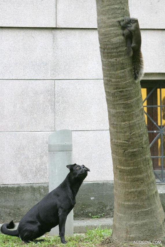 Very Brave Squirrel (5 pics)