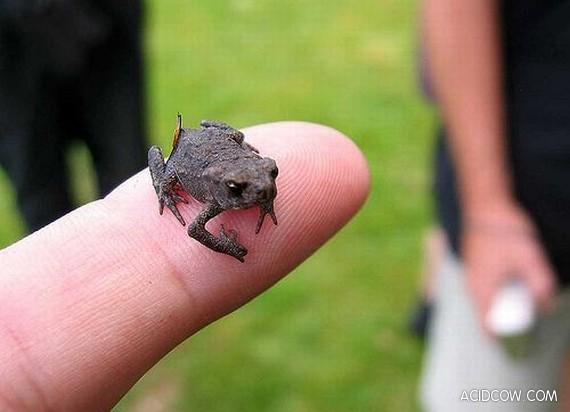 Finger-Size Creatures (103 Pics)