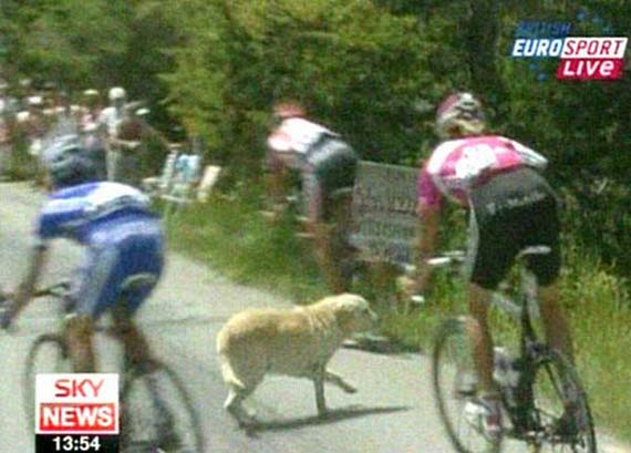 Dog at Tour de France (4 pics + video)