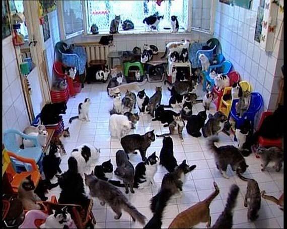 Cat's Hostel (3 pics+ video)