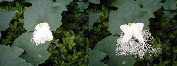 Interesting Flower (4 pics)