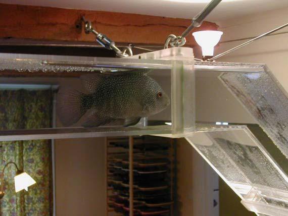 Interesting Aquarium (9 pics)