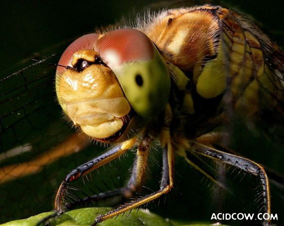 Beautiful Macro Photos of Insects (15 pics)