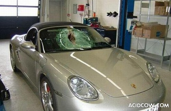 Porsche Boxster vs a Bird at a Speed of 155 mph (250 km/h) (3 pics)