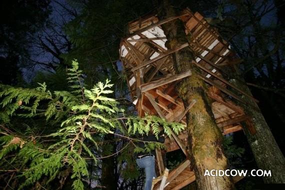 Amazing Treehouses (12 pics)