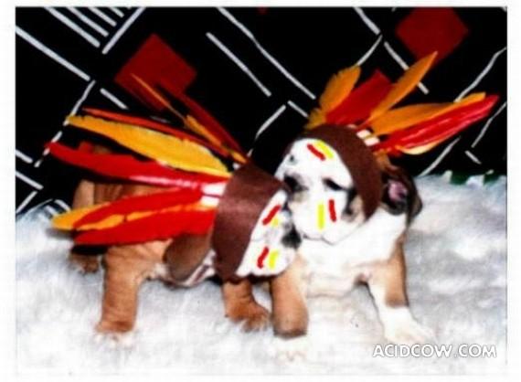 Bulldogs are funny dogs, aha ;)) (29 photos)