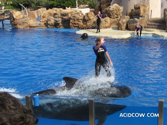 Photos with dolphins (31 pic)