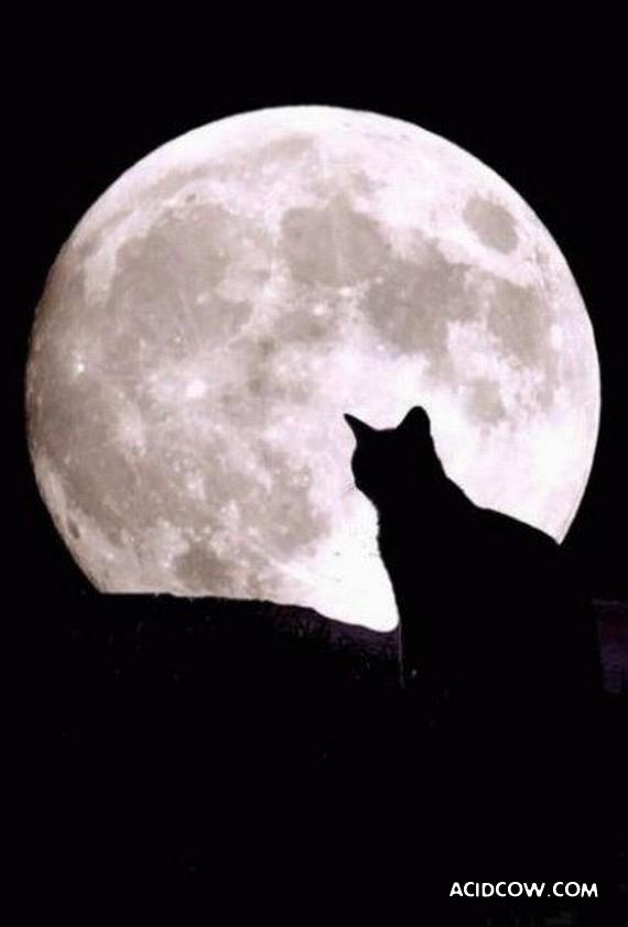 Cats simply charm! (57 pics)