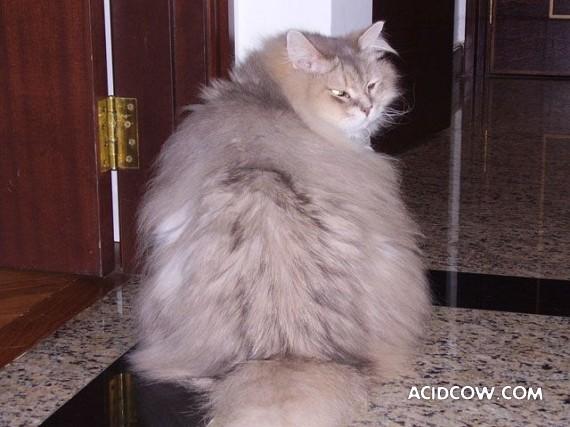 Fat animals (22 pics)