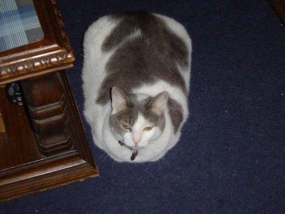 Fat animals (22 pics)