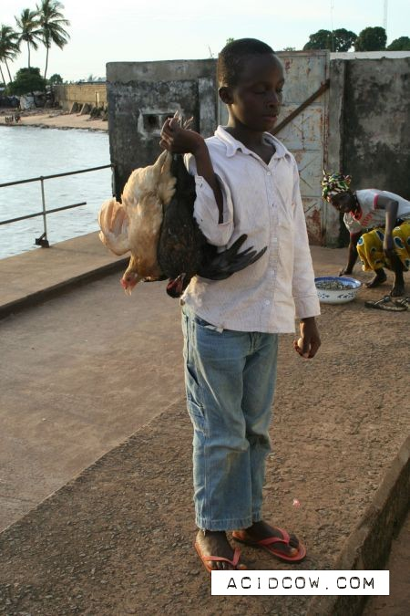 Chicken transportation (22 pics)