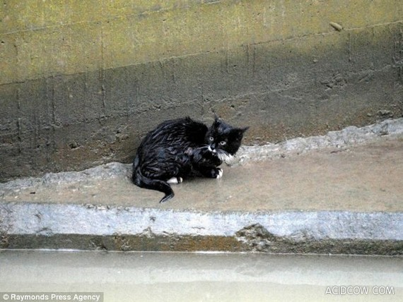 Saving Private Kitty (7 pics)