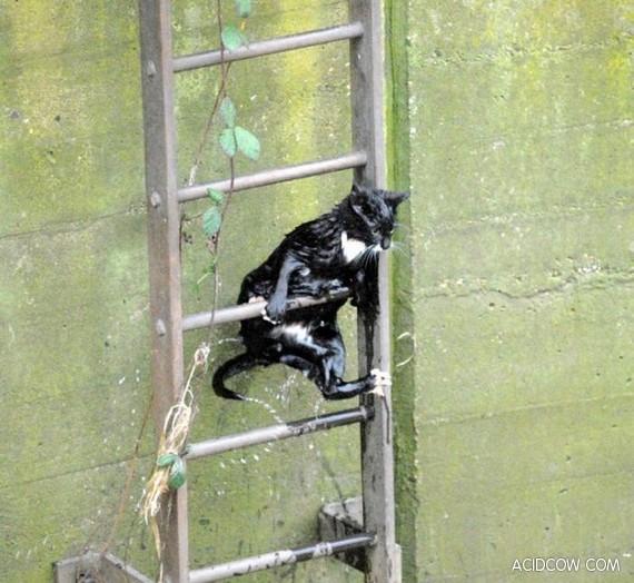 Saving Private Kitty (7 pics)
