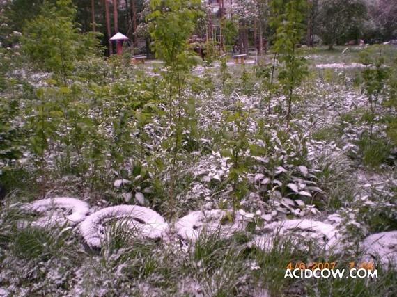 Russian summer (11 pics)