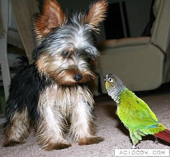 Animals friendship (122 pics)