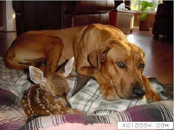 Animals friendship (122 pics)