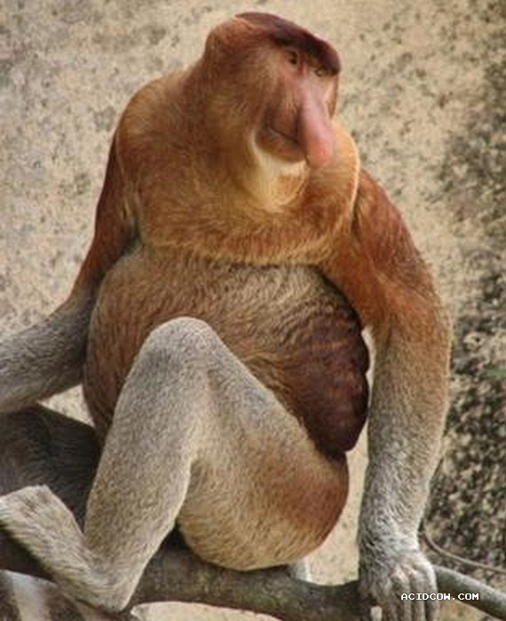 The Most Surprising Animals (27 pics)