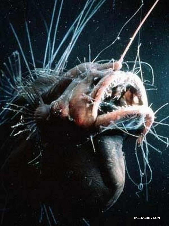 Sea monsters (41 pics)