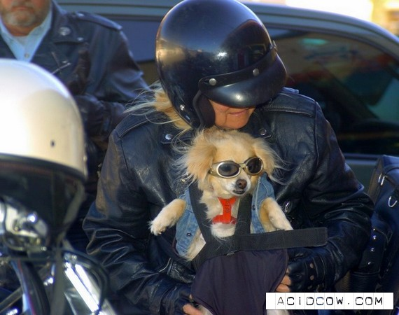 Cool doggies (20 pics)