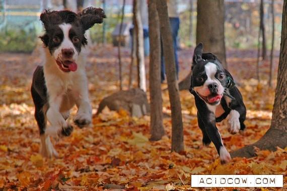Cool doggies (20 pics)