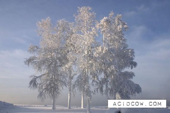 Very beautiful winter photos (18 photo)
