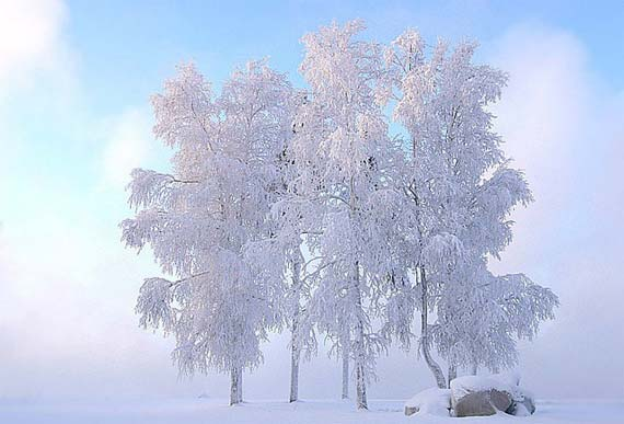 Very beautiful winter photos (18 photo)