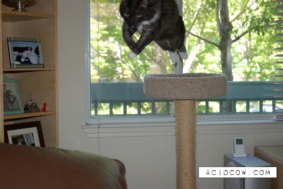 Flying cats (21 pics)