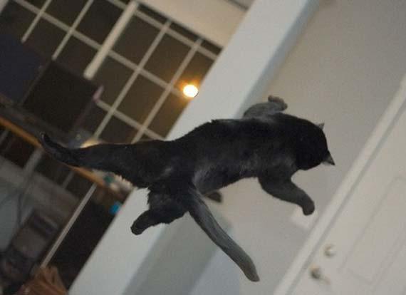Flying cats (21 pics)