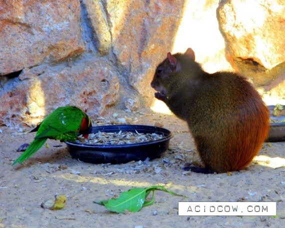 Animals stealing food (16 pics)