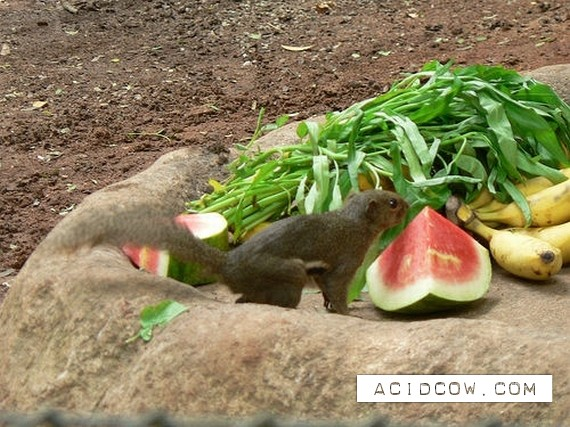Animals stealing food (16 pics)