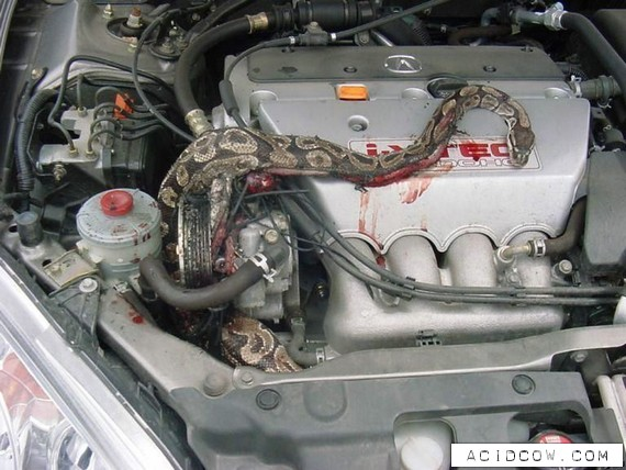 Snake In The Engine (4 pics)