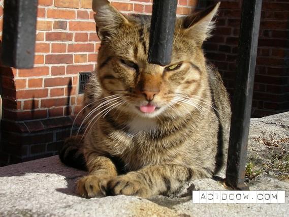 Cat's Tongue (27 pics)