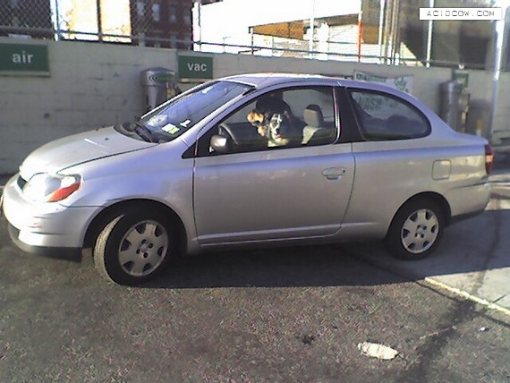 Car and Dog (52 pics)