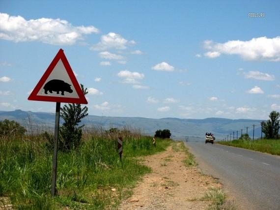 Very Strange & Funny Road Signs (39 pics)
