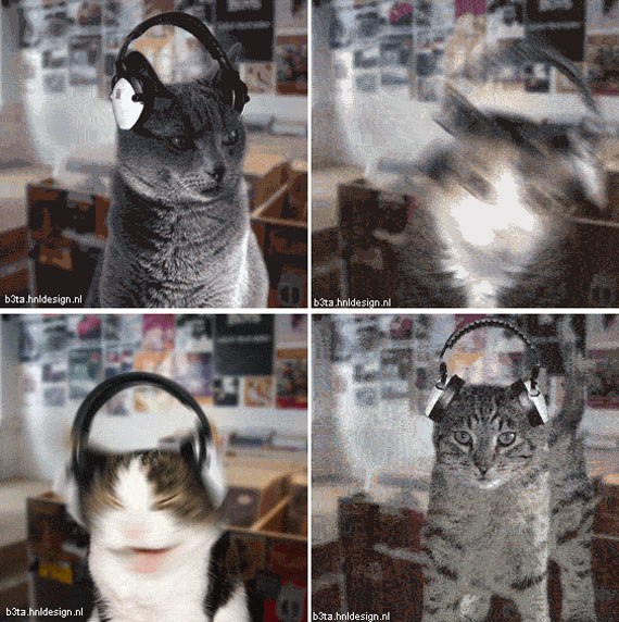 Funny cats! (26 gifs)