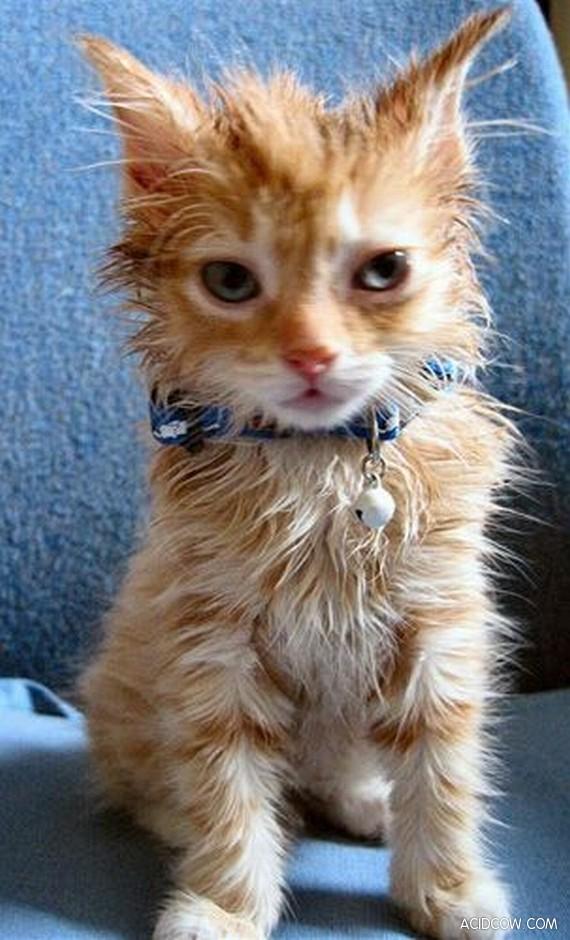 Wet cats (26 pics)