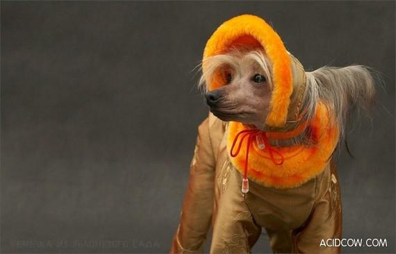 Funny Animals (86 pics)