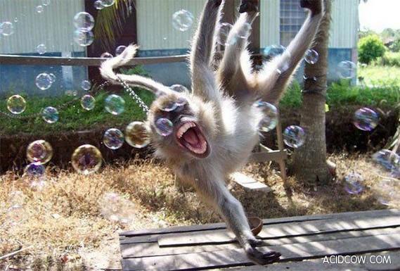 Funny Animals (55 pics)